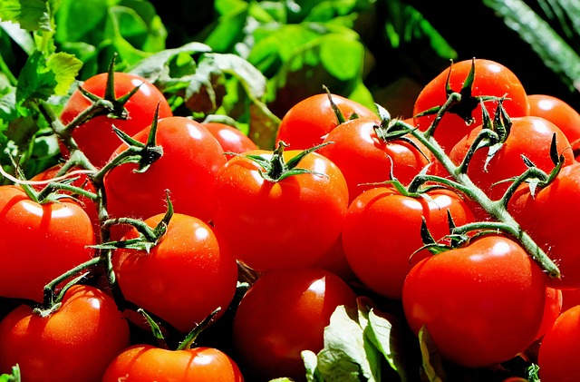 tomates-musicales